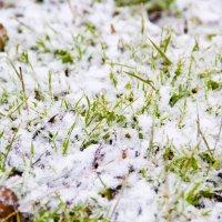 трава в снегу :: Oksana Verkhoglyad