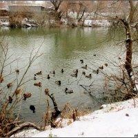 Река Темерник в парке Октября... :: Нина Бутко