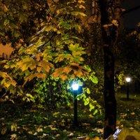 Ночь, фонарь и осень. :: Владимир Безбородов