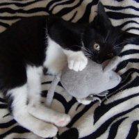 Кузя и любимая мышь :: Ирина Арефьева