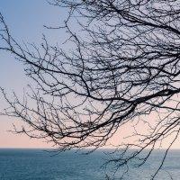 переплетение на закате :: Надежда Шемякина