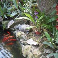В Никитском Ботаническом Саду :: Елена Павлова (Смолова)