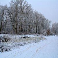 в зимнем лесу :: Наталья Сазонова