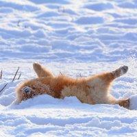 Ура!Зима пришла. :: Sergey (Apg)