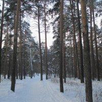 Зимний лес.... :: Valentina