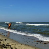 Балтийский берег. Ловец янтаря. :: Murat Bukaev