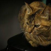 Задумчивость бывает и у кошек... :: Арина