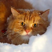 Зима и кот :: Краснов  Ю Ф