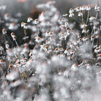 почти снежное поле :: Эльмира Суворова