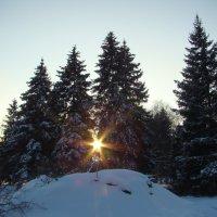 Солнце сквозь ели... :: марина ковшова