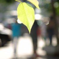 Весна :: Елена Бушуева