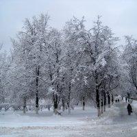 Зимним днем :: Елена Семигина