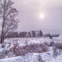 В декабре :: Вера Сафонова