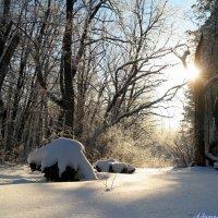 Хорошо в заснеженном лесу! :: Андрей Заломленков