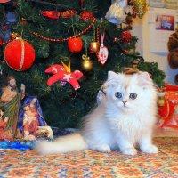 Мой котик. :: Оля Богданович