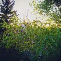 Весна :: Jack Wall