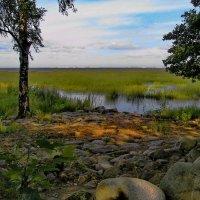 Вид на заросший Финский залив из Александрийского парка. :: Владимир Ильич Батарин