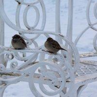 На зимней скамейке :: Aнна Зарубина