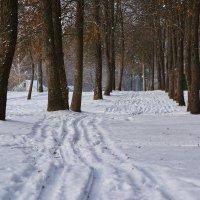 Приход зимы. :: Paparazzi