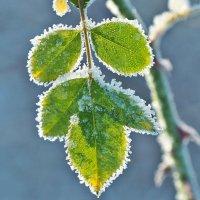 Морозное кружево :: Swetlana V