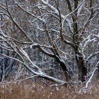 Первый снег :: Игорь Пилатович