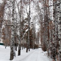 Рыжая зима . :: Мила Бовкун