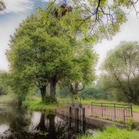 Петергофский пруд :: Валерий Смирнов