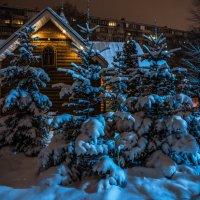 Елочки в снегу :: Инга Мысловская