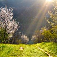 Волшебство весны :: Nina Streapan
