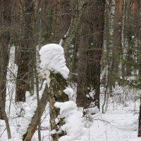 Шел по лесу старичок :: Galaelina ***