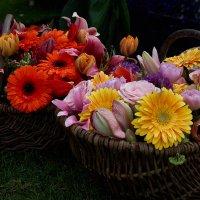 Корзина цветов :: Валентина Харламова