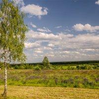 В стране цветущих трав :: Александр Березуцкий (nevant60)
