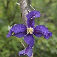 Цветок :: Александр Русинов