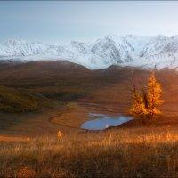 Золото Алтая :: Влад Соколовский