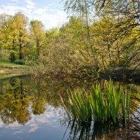 В ботаническом саду :: Денис Масленников