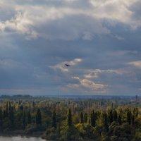 грецкий орех в клюве у вороны, которая летит над рекой Старая Кубань :: Таня Харитонова