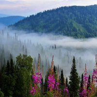 Застилает склоны туманом :: Сергей Чиняев