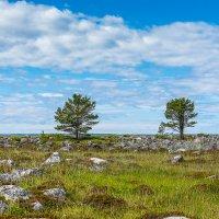 И на камнях растут деревья. :: Николай