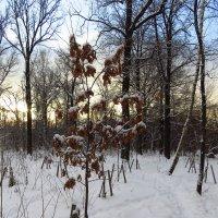В Москве - зима :: Андрей Лукьянов