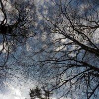 Весна бездонная :: Регина Пупач