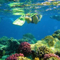 Над рифами Горгонии... :: Sergey Gordoff