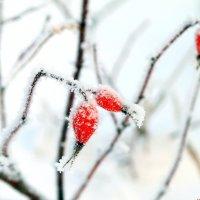 Замороженные витамины.. :: Андрей Заломленков