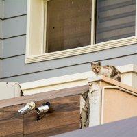 Кошечка на углу дома :: Kristina Suvorova