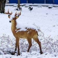 Зима в летнем парке :: Игорь Сикорский