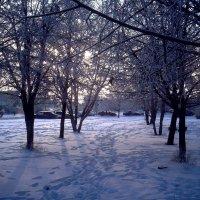 Зимушка зима. :: bemam *
