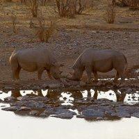 Два носорога на закате :: Михаил Рогожин