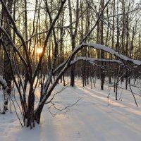 Мороз и солнце, день чудесный! :: Андрей Лукьянов