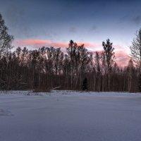 Закат в подмосковном лесу :: Владимир Брагилевский