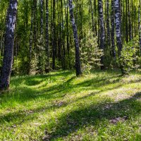 Брянский лес :: Александр Березуцкий (nevant60)