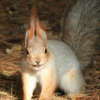 Я орешки грызу и на тебе смотрю!!! :: Светлана Масленникова